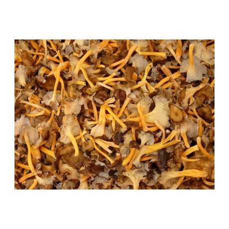 Dried cantharellus lutescens - 1kg